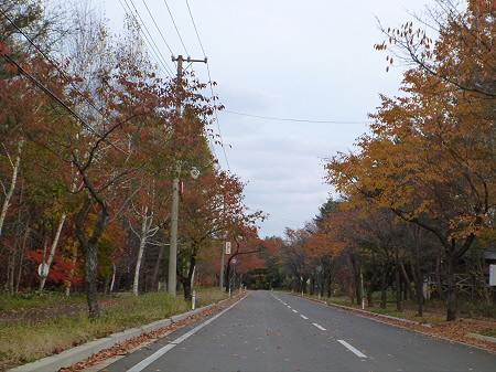 八幡平温泉郷の紅葉11(2011.11.2)