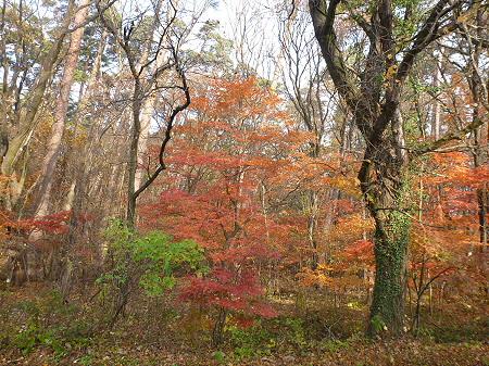 松森山自然環境保全地域の紅葉01(2011.11.4)