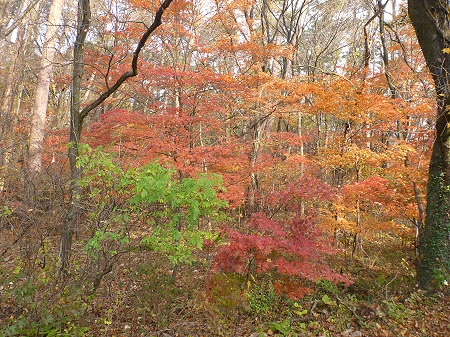 松森山自然環境保全地域の紅葉03(2011.11.4)