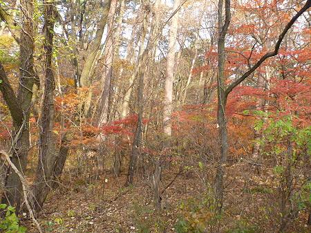 松森山自然環境保全地域の紅葉04(2011.11.4)
