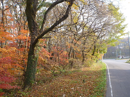 松森山自然環境保全地域の紅葉05(2011.11.4)