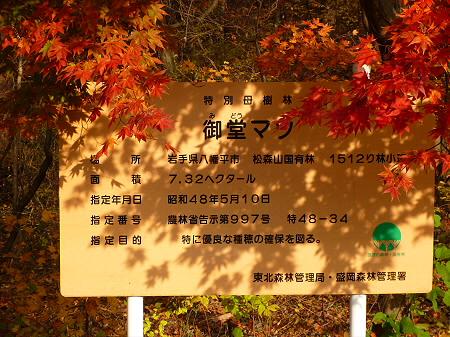 松森山自然環境保全地域の紅葉06(2011.11.4)