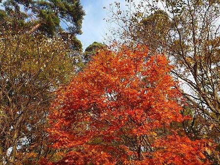 松森山自然環境保全地域の紅葉07(2011.11.4)