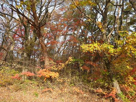 松森山自然環境保全地域の紅葉08(2011.11.4)