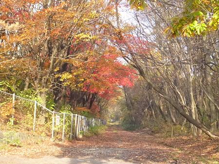 松森山自然環境保全地域の紅葉10(2011.11.4)