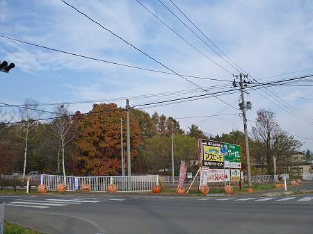 県道23号線の紅葉01(2011.11.4)