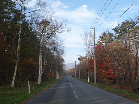 県道23号線の紅葉03(2011.11.4)