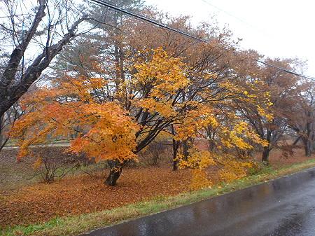 明治百年記念公園の紅葉01(2011.11.6)
