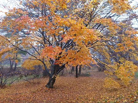 明治百年記念公園の紅葉02(2011.11.6)
