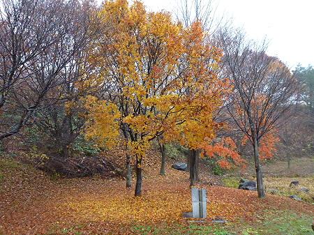紅葉の八幡平市さくら公園04(2011.11.6)