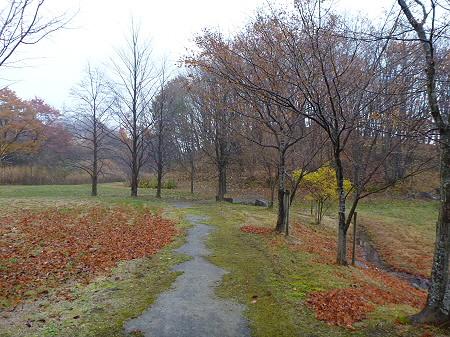 紅葉の八幡平市さくら公園09(2011.11.6)