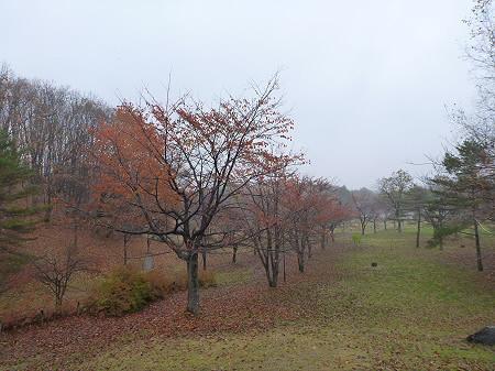 紅葉の八幡平市さくら公園11(2011.11.6)