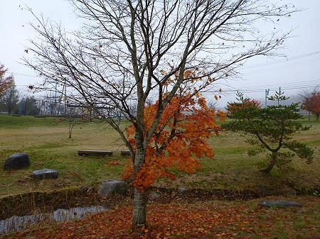 紅葉の八幡平市さくら公園15(2011.11.6)