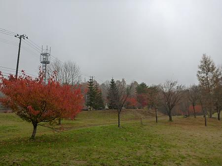 紅葉の八幡平市さくら公園16(2011.11.6)