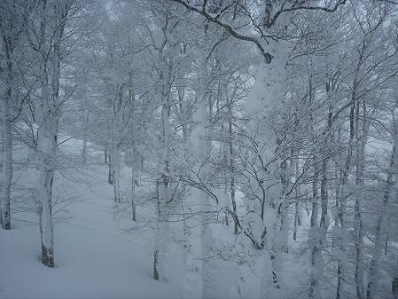 マニハチ探検隊45(2011.2.11)阿仁スキー場