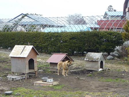 ワタサン商店前の犬01(2011.4.7)