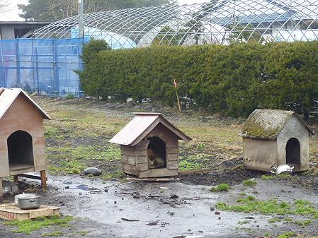 ワタサン商店前の犬04(2011.4.9)