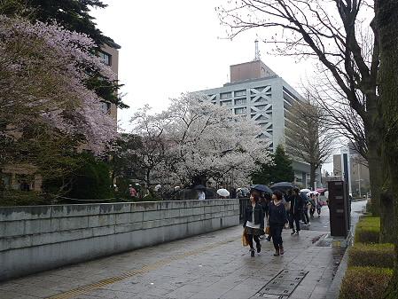 石割桜09(2011.4.30)