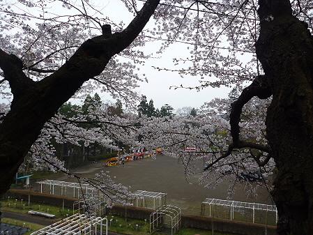 盛岡城跡公園の桜02(2011.4.30)