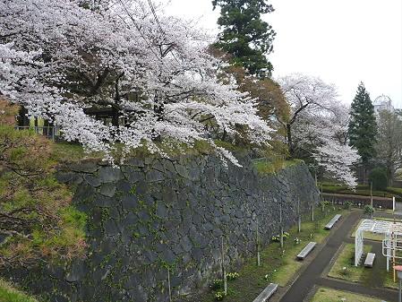 盛岡城跡公園の桜03(2011.4.30)