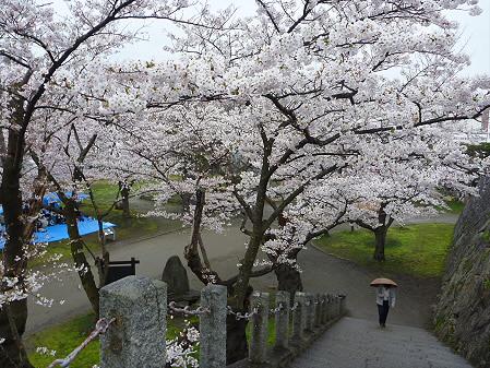 盛岡城跡公園の桜05(2011.4.30)