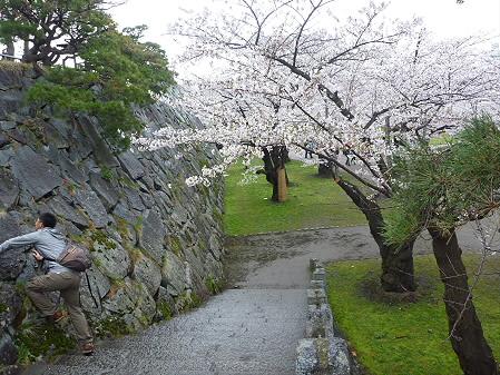 盛岡城跡公園の桜01(2011.4.30)