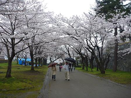 盛岡城跡公園の桜08(2011.4.30)