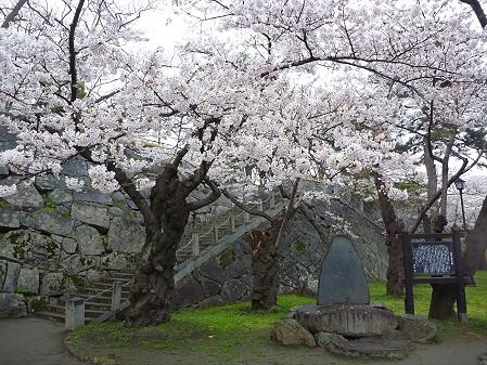 盛岡城跡公園の桜09(2011.4.30)