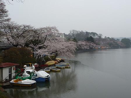 高松公園の桜03(2011.4.30)