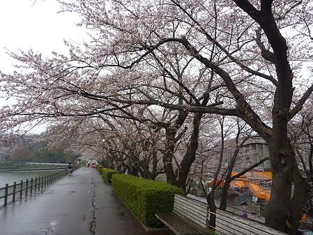 高松公園の桜06(2011.4.30)