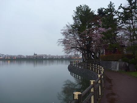 高松公園の桜17(2011.4.30)