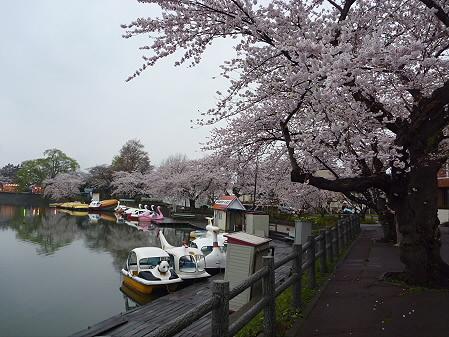 高松公園の桜19(2011.4.30)