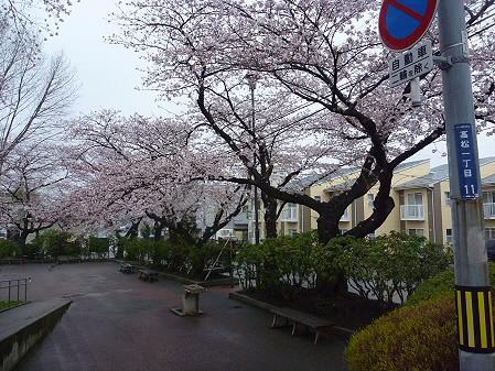 高松公園の桜26(2011.4.30)