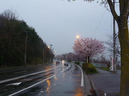 岩脇~東黒石野の桜01(2011.4.30)