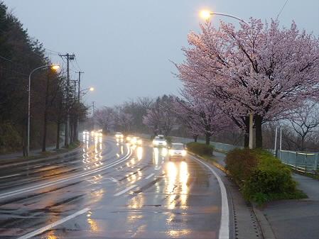 岩脇~東黒石野の桜04(2011.4.30)