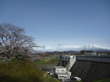 四十四田ダムの桜06(2011.5.2)