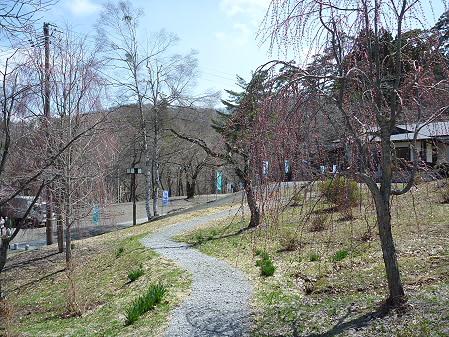 桜松公園の桜05(2011.5.2)