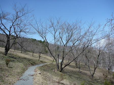 桜松公園の桜03(2011.5.2)