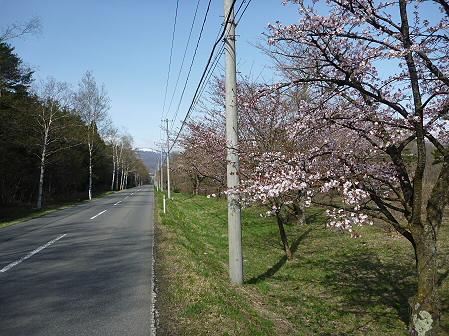 明治百年記念公園の桜03(2011.5.9)