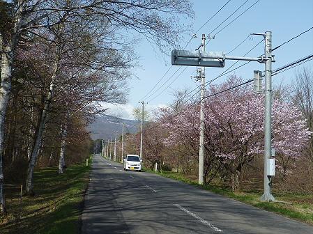 明治百年記念公園の桜07(2011.5.9)