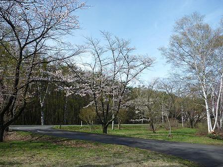 明治百年記念公園の桜01(2011.5.10)