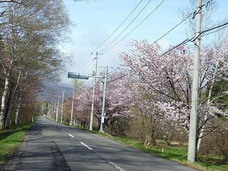 明治百年記念公園の桜07(2011.5.10)