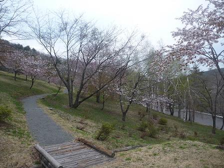 桜松公園の桜01(2011.5.11)