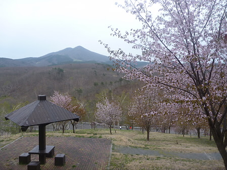 桜松公園の桜04(2011.5.11)