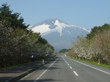 上坊牧野手前の桜並木01(2011.5.12)