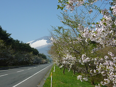 上坊牧野手前の桜並木02(2011.5.12)