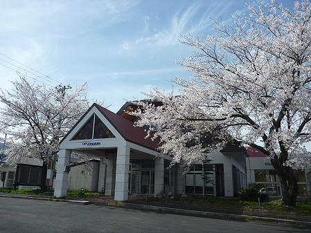 八幡平トラウトガーデンの桜03(2011.5.13)