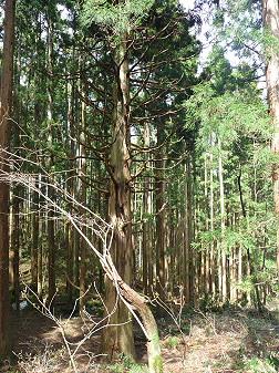 教育旅行姫神登山06(2011.5.13)