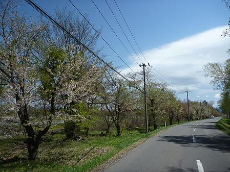 明治百年記念公園の桜07(2011.5.15)