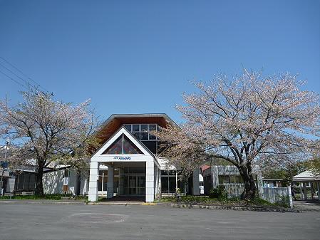 八幡平トラウトガーデンの桜01(2011.5.15)
